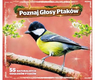 Poznaj głosy ptaków
