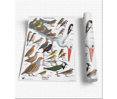 Ptaki na wsi - plansza 60x85 cm