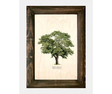 Obraz na drewnie Robinia akacjowa