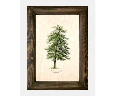Obraz na drewnie Modrzew europejski