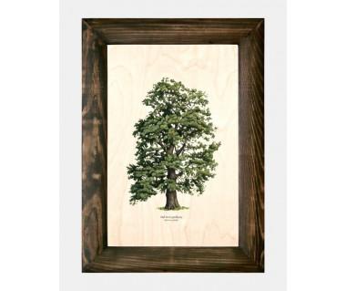 Obraz na drewnie Dąb bezpszypułkowy