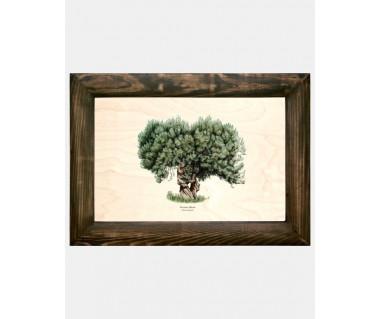 Obraz na drewnie Drzewo oliwne