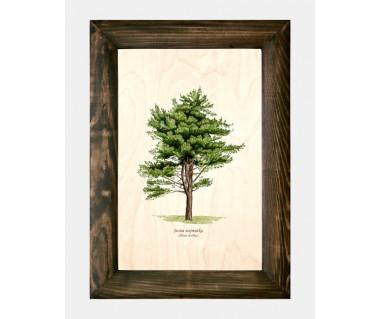 Obraz na drewnie Sosna wejmutka