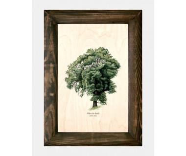 Obraz na drewnie Wierzba biała